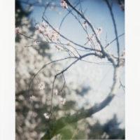 """Heli Hiltunen """"Untitled (Cherry-Focus)"""